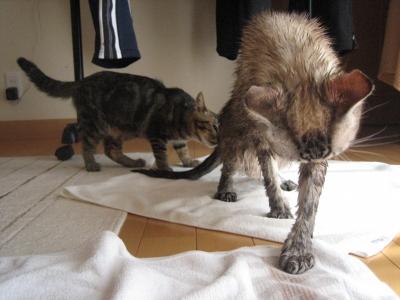 濡れ猫その2