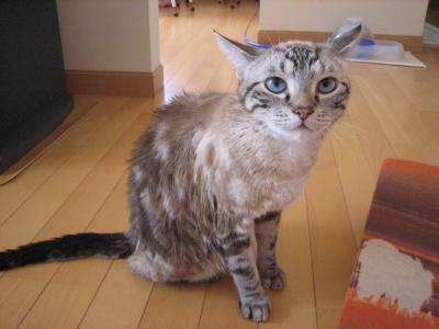 濡れ猫アクア