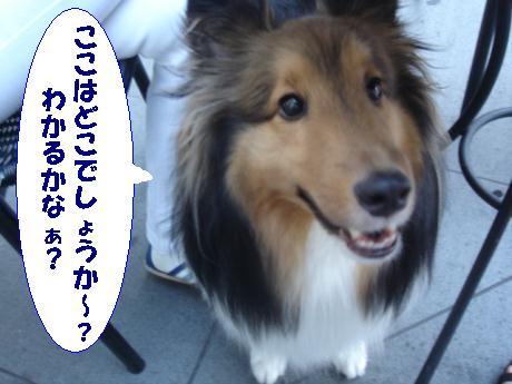DSC04922.jpg