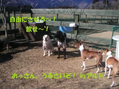 PICT01040296.jpg