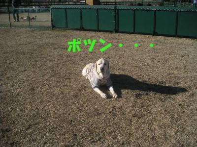PICT01040306.jpg