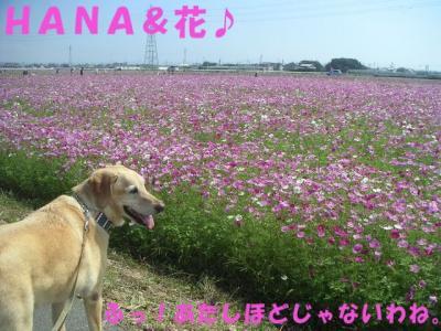 PICT10050156.jpg
