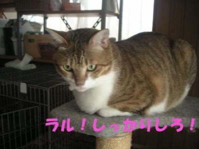 PICT10120141.jpg