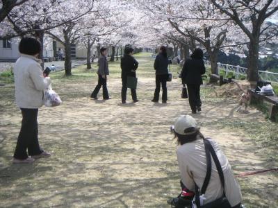 PICTsakura0073.jpg