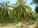 タイ・ジャム島~coconut Beach の事