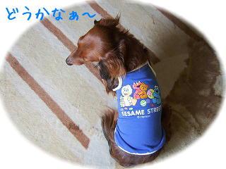 s-2007_0708kuro0023t.jpg