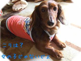 s-2007_0708kuro0028t.jpg