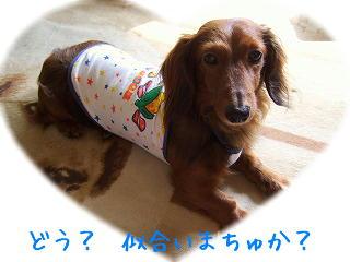 s-2007_0708kuro0031t.jpg