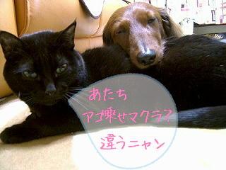 s-oyasyumimakura.jpg