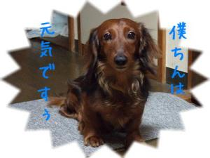 ss-2008_0730kuro0001.jpg