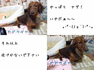 ss-ss-2008_0220kuro0011.jpg