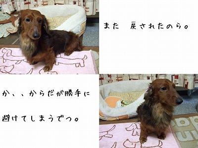 ss-ss-2008_0220kuro0016.jpg