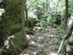 Glen Trail