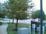 街路樹です