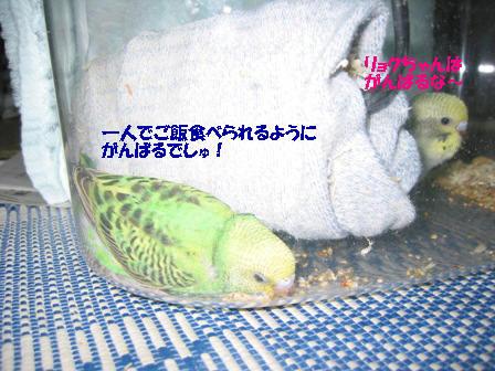 IMG_5981.jpg