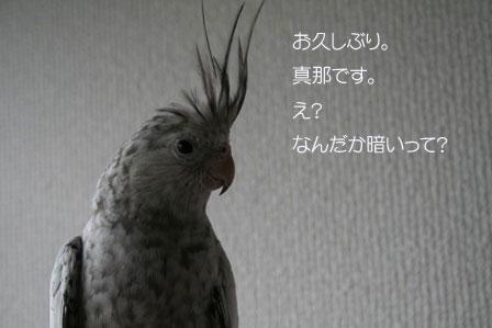 mana11.jpg