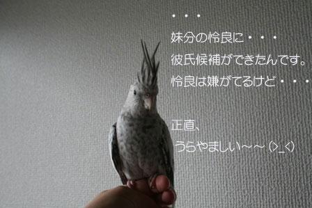 mana12.jpg