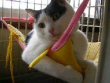 可愛い柚子ちゃん!