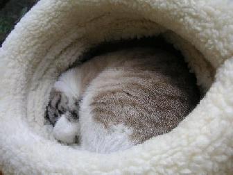 きゅうちゃんの巣