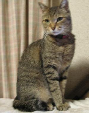 スレンダー美猫のちぃさん