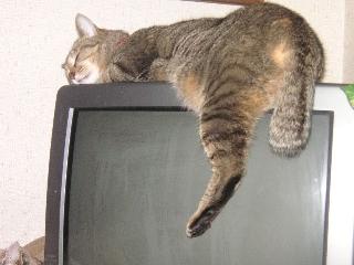 テレビ、磨いたほうがいいですね~
