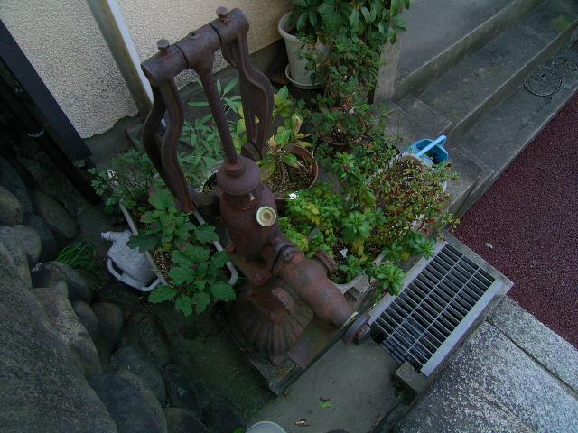 biwajima0540.jpg