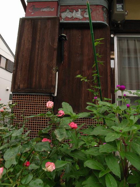 kanou-mizuno1886.jpg