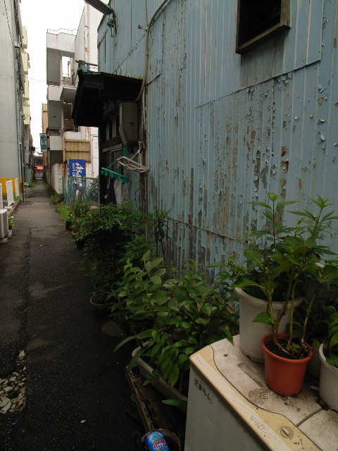 kanou-mizuno1890.jpg