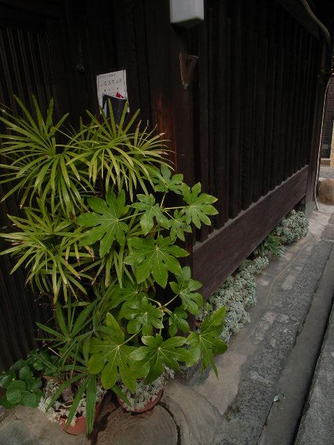 koriyama3713.jpg