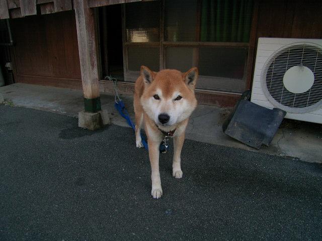 nakanomachi0821.jpg