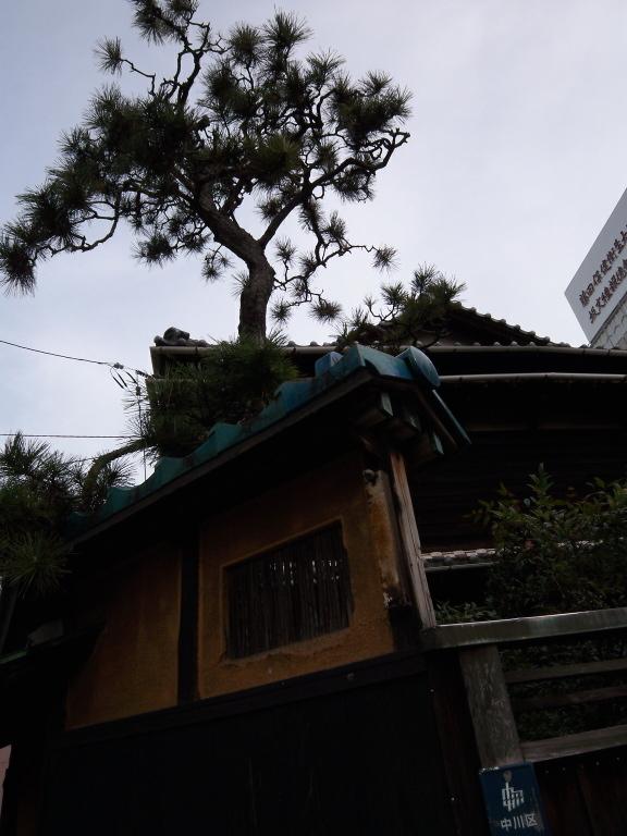 otoubashi2768.jpg