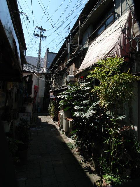 sakurayama1165.jpg