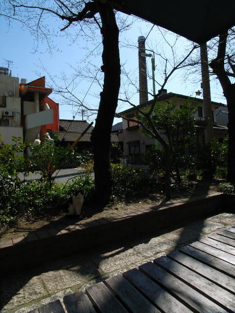 sawakami1205-2.jpg