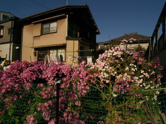 shinkawa0579.jpg