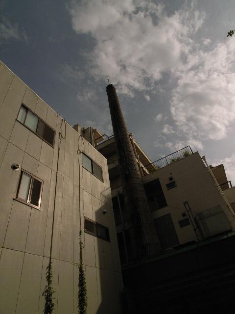 shiragiku-yu2463.jpg