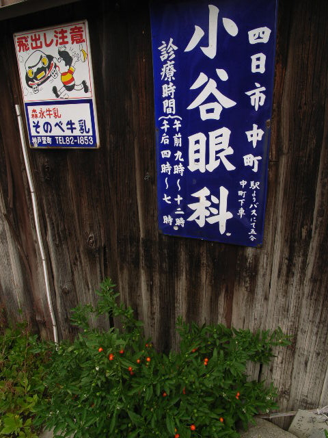 suzuka2519.jpg