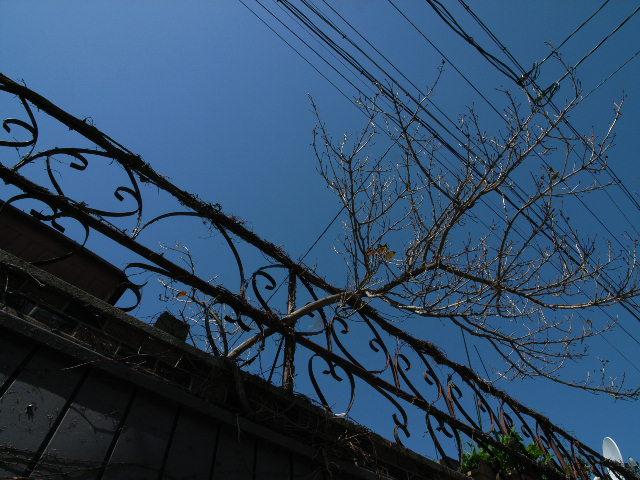 touei1174.jpg