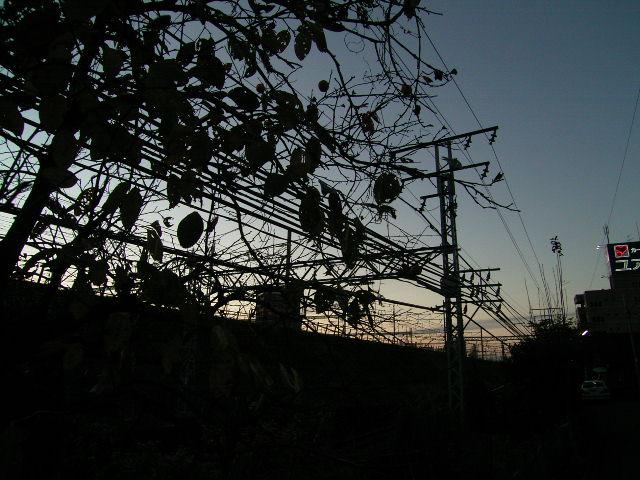 ushijima0053.jpg