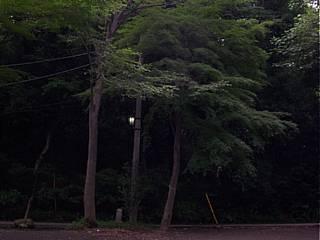 ゲゲゲの森?