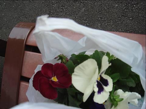 冬のお花。