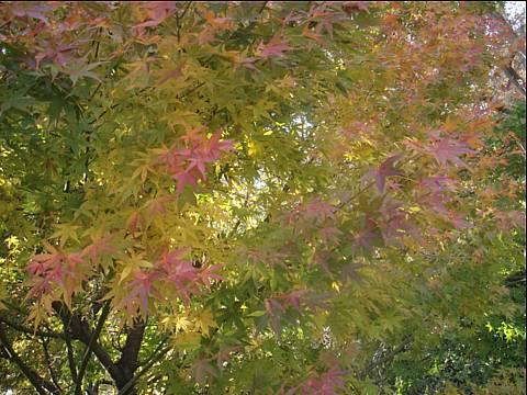 にっぽんの秋。