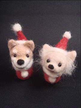 チワワと柴犬。
