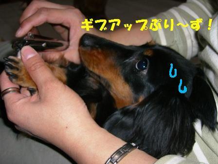 tori7.jpg