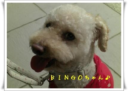 BINGOちゃん