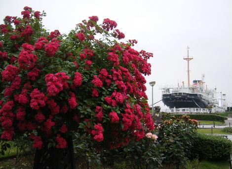 2008_0608横浜多摩川兵庫島自由が丘0002