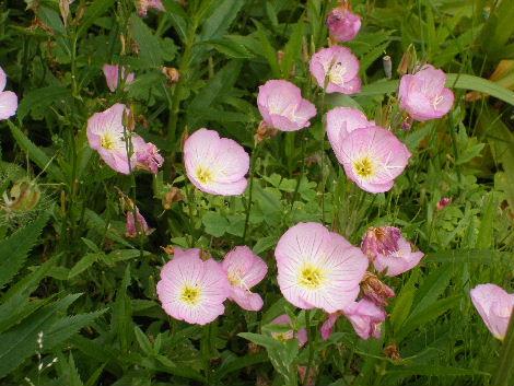 2008_0608横浜多摩川兵庫島自由が丘0021