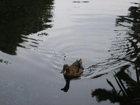 2008_0608横浜多摩川兵庫島自由が丘0026