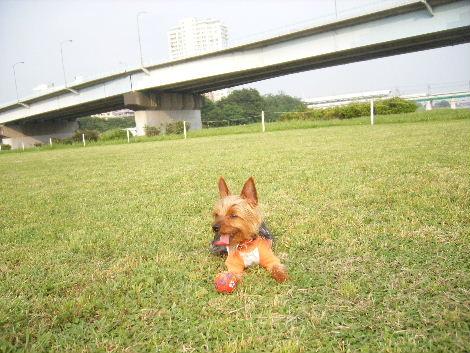 2008_0608横浜多摩川兵庫島自由が丘0033