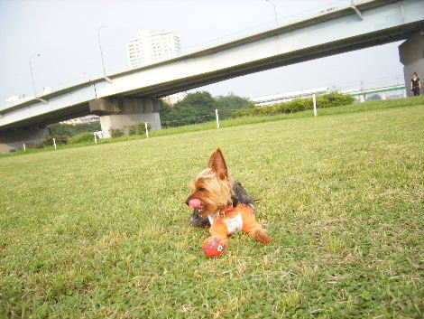 2008_0608横浜多摩川兵庫島自由が丘0034