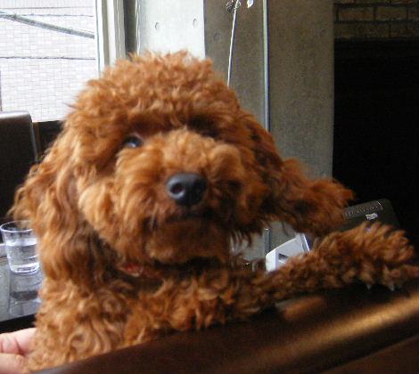 2008_0610六本木駒沢0006